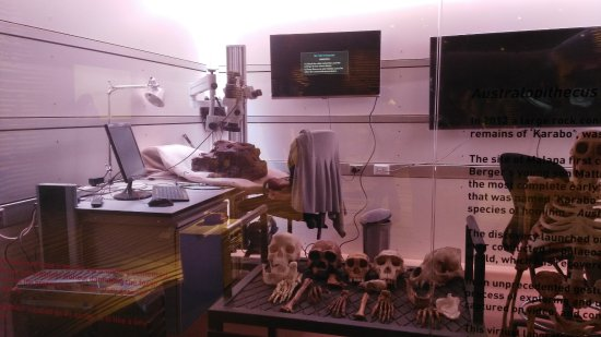 The Cradle of Humankind: A laboratory in one of the chamber