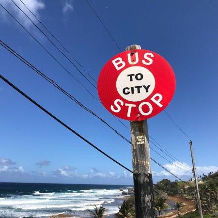Bathsheba, Barbados: photo2.jpg