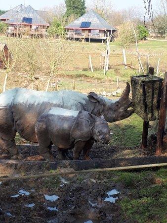 Hermival-les-Vaux, Frankrike: Rhinos