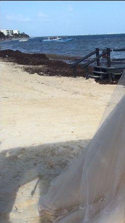 Seaweed On Beach Today Picture Of Azul Beach Resort Resort Riviera Cancun Puerto Morelos Tripadvisor
