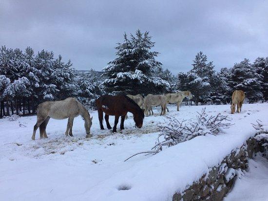 Hoyos del Espino, Spanien: IMG-20180204-WA0008_large.jpg