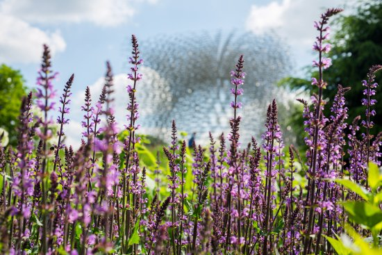 Kew, UK: The Hive