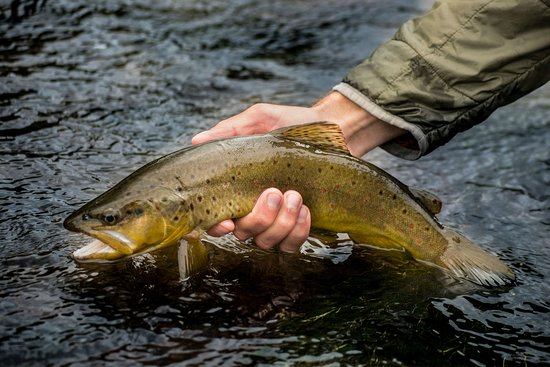 4UR Ranch: Trout on Goose Creek at the 4UR