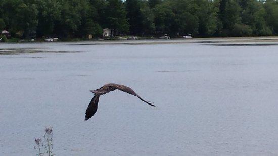 Montello, WI: Eagles soar!