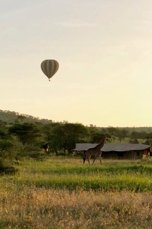 Lemala Ngorongoro Tented Camp : in the morning you can see giraffes, elephants or hot air balloons just at your doorstep