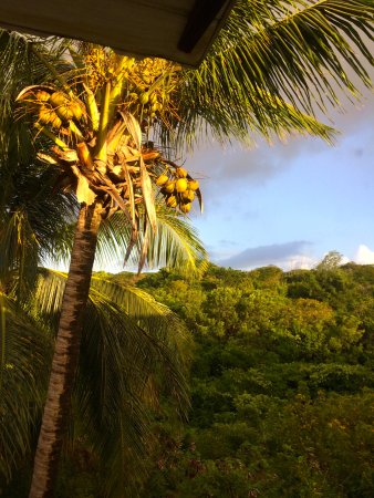 Sugar Cane Club Hotel & Spa: Coconuts at dawn