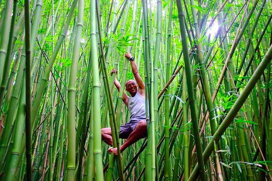 Makawao, Hawaje: Bamboo Forest in Hana