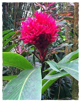 Papaikou, HI: Colour at botanical gardens