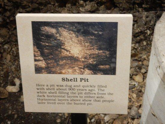 Osprey, FL: inside native shell mound