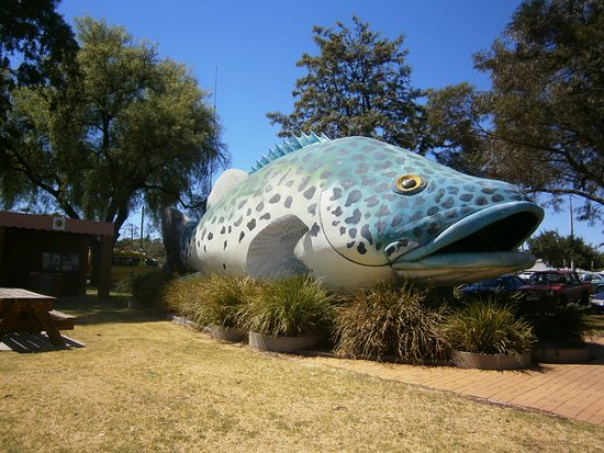 Swan Hill, Austrália: Don't forget The Big Murray Cod across the road from info centre