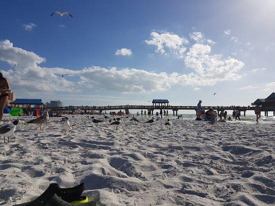 Clearwater Beach : 20180222_180526_large.jpg