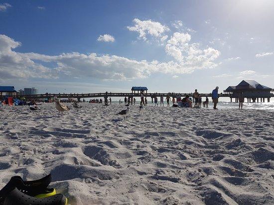 Clearwater Beach : 20180222_180545_large.jpg