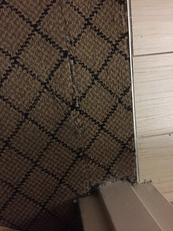 Blythewood, SC: Ripped carpet