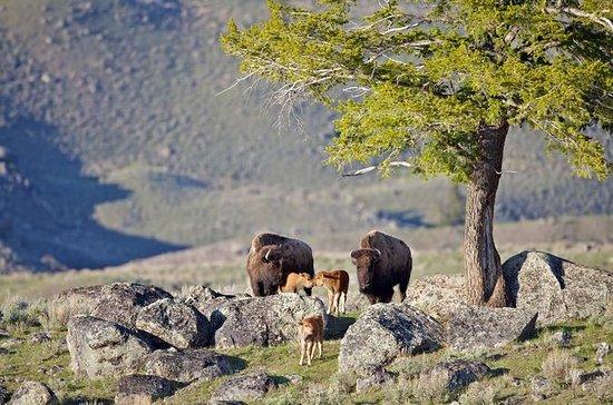 Tour Privado del Parque Nacional de...