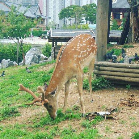 Songdo Central Park: IMG_20170716_230317_399_large.jpg