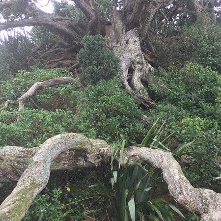 Tiritiri Matangi Island: photo0.jpg