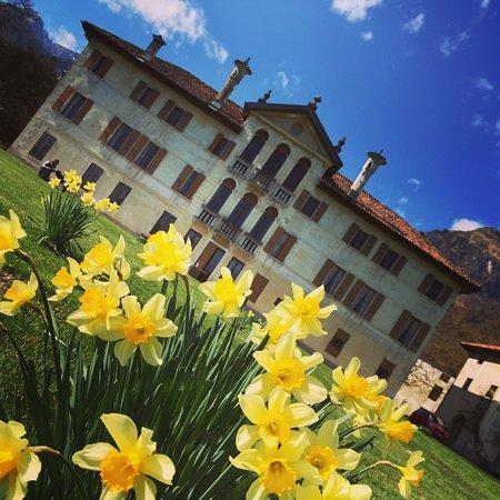 Villa Zugni Tauro de Mezzan di Feltre: Primavera e narcisi