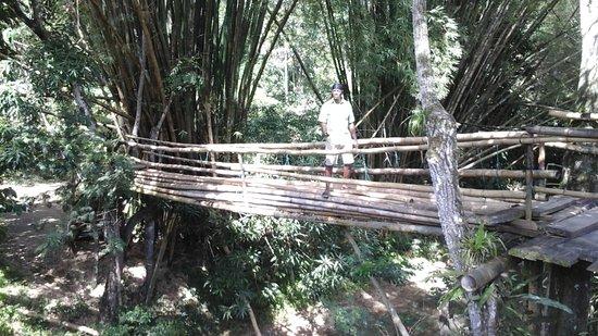 Savanna La Mar, Jamaica: The Bamboo Bridge at the Original Mayfield Falls