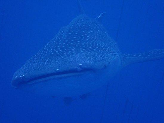 Nankuru Divers Okinawa