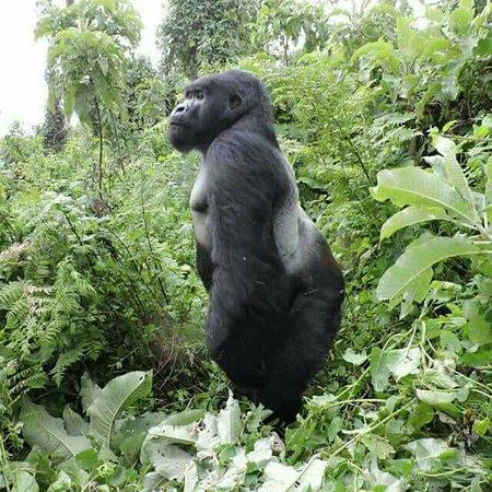 Gorilla Holidays