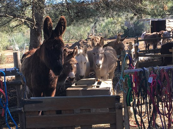 Le Cros, Frankrike: Les ânes