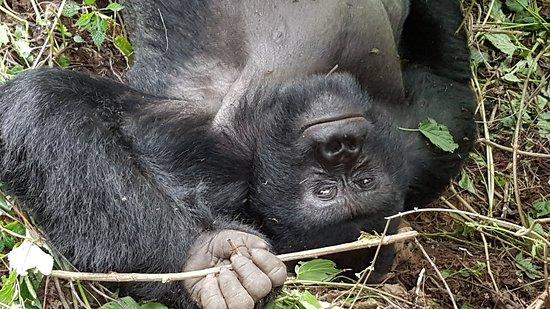 North Kivu Province, جمهورية الكونغو الديمقراطية: 20180217_120306_large.jpg