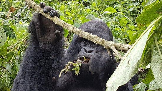 North Kivu Province, جمهورية الكونغو الديمقراطية: 20180217_114521_large.jpg