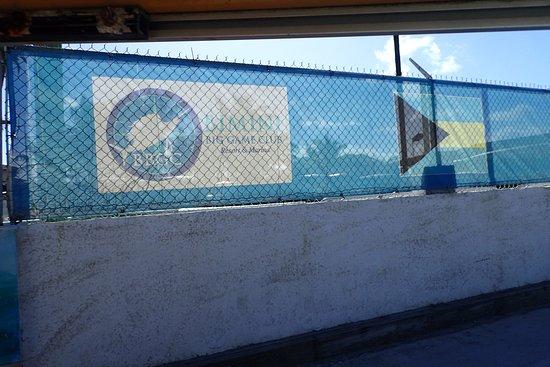 Bimini Big Game Club Resort & Marina Bild