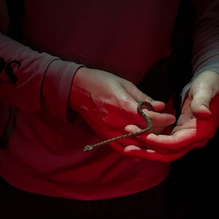 The Night Tour with Tracie The Bug Lady: photo1.jpg