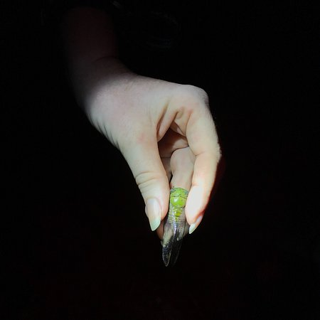 The Night Tour with Tracie The Bug Lady: photo3.jpg
