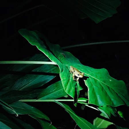 The Night Tour with Tracie The Bug Lady: photo4.jpg