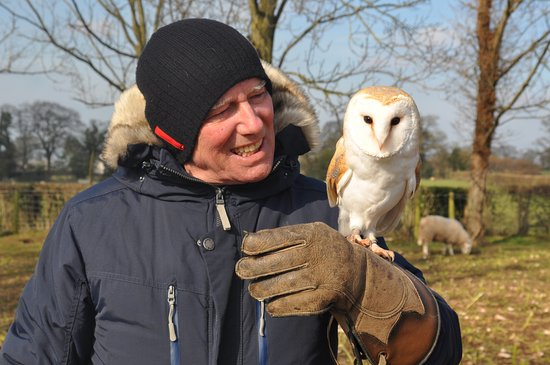 Llangynhafal, UK: Owl mates.