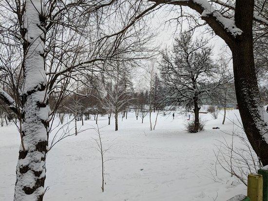 Park PDM