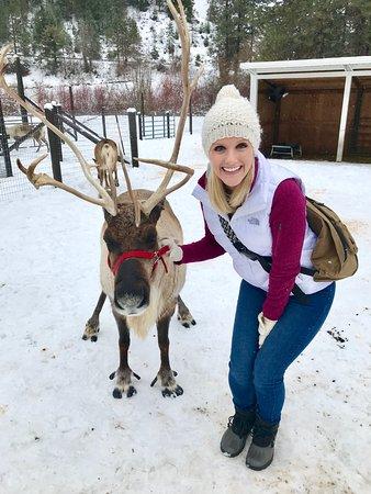 Snowy Magical Picture Of Leavenworth Reindeer Farm Leavenworth Tripadvisor