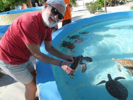 Sea Turtle Hatchery : You are taught how to hold the turtles for a photo.