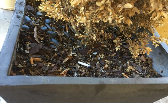 Artmore Hotel: Cigarette butts left in a flower pot.
