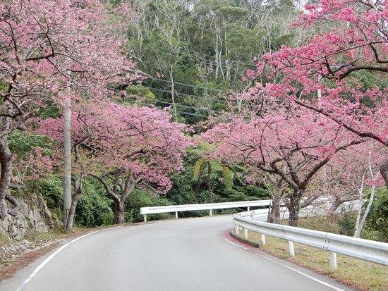 Mt. Yaedake