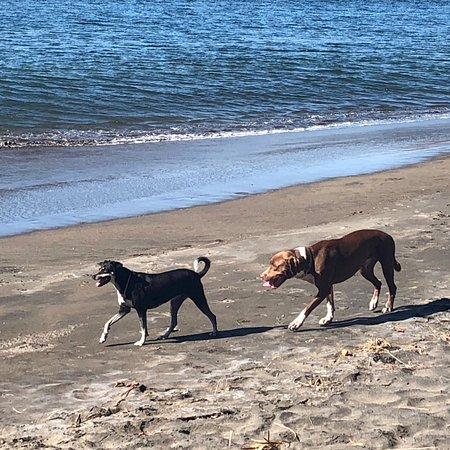 The Beach House Restaurant and Bar: Beach Dogs