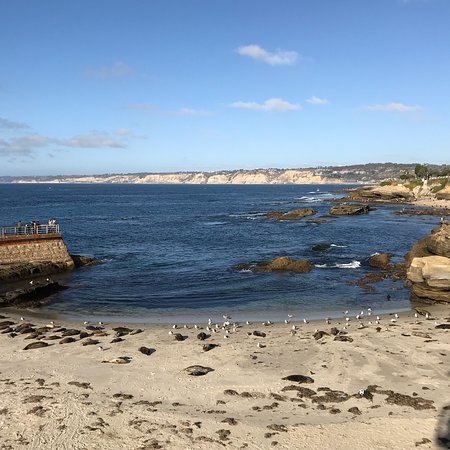 Children S Pool La Jolla All You Need To Know Before