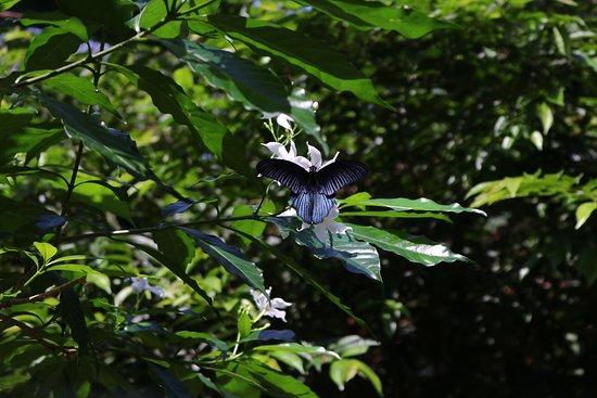 Butterfly Farm Khao Lak