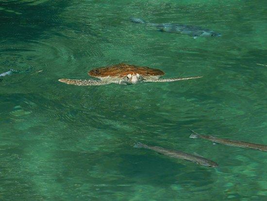 Parque Xcaret: turtles