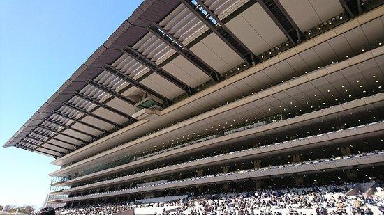 Tokyo Horse Racetrack : DSC_2139_large.jpg