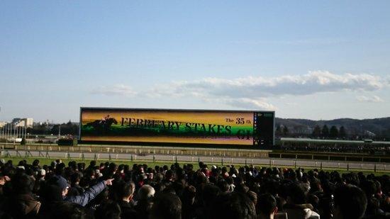 Tokyo Horse Racetrack : DSC_2158_large.jpg