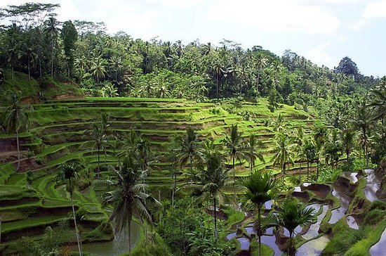 Private Tour: All about Ubud Full-Day
