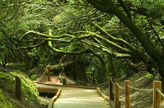 4-Hour Trekking Tour in Anaga Nature...