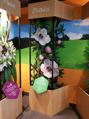 Havelock North, Nouvelle-Zélande : Arataki Honey Visitor Centre