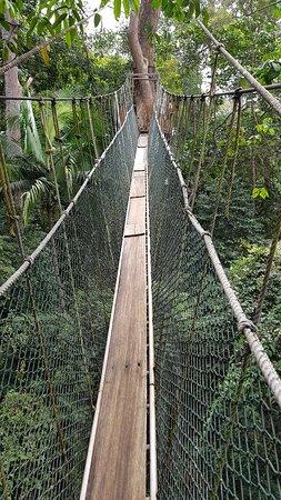Taman Negara Canopy Walkway & Taman Negara Canopy Walkway (Taman Negara National Park) - All You ...