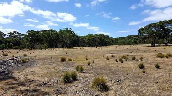 Hanson Bay, Australia: Fauna