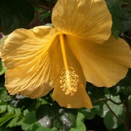 Diamond Botanical Gardens: Przepiękne miejsce z wspaniałą roślinnością!