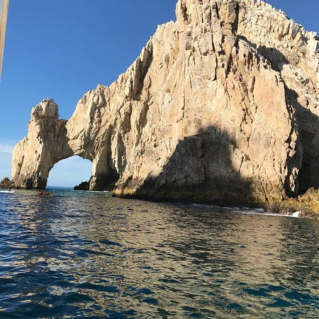 Whale Watch Cabo: photo1.jpg